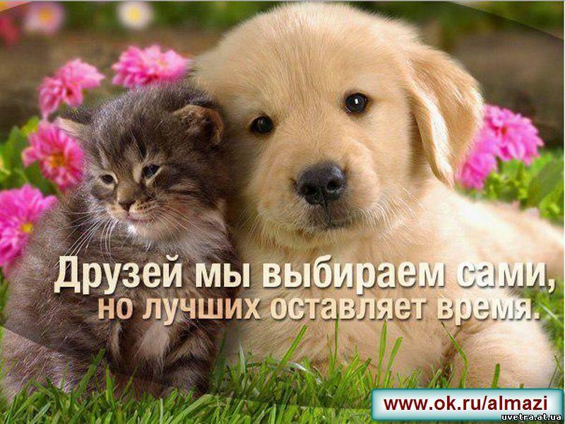 Лучшее поздравление для лучшей друг